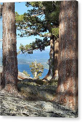 Big Trees Little Tree Canvas Print