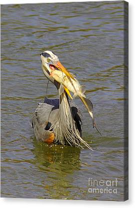 Bigger Fish To Fry Canvas Print by Robert Frederick