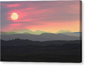 Bighorns At Sunset Canvas Print