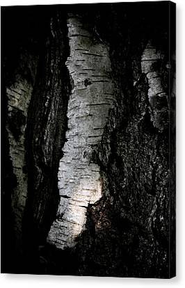 Birch Abstraction Canvas Print by Odd Jeppesen