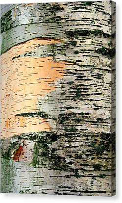Birch Bark Canvas Print by Kathy Peltomaa Lewis