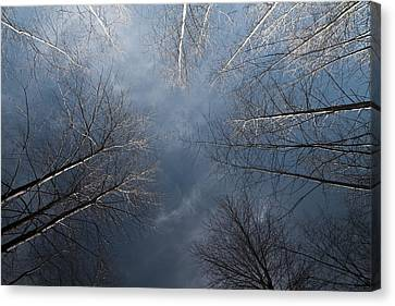 Birch Canvas Print by James Ingham