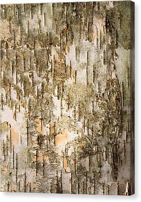 Birch Tree Bark Detail Canvas Print by Siede Preis