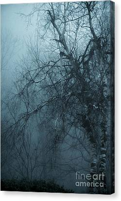 Birch Tree In Fog Canvas Print by HD Connelly