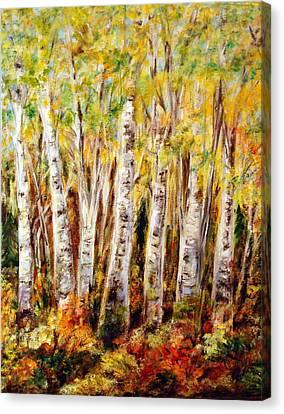 Birch Tree In Sunshine Canvas Print