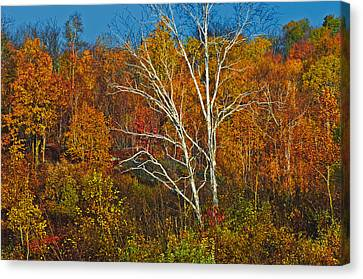 Birch Tree Surrounded By Colorful Canvas Print by Mike Grandmailson