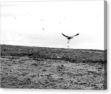 Bird And Beach Canvas Print