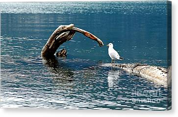 Bird And Log Canvas Print by Barry Shaffer
