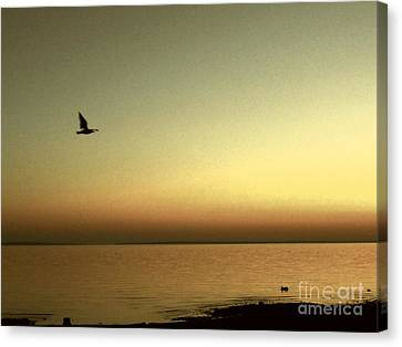 Bird At Sunrise - Sepia Canvas Print