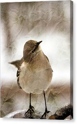 Bird In A Bag Canvas Print by Skip Willits