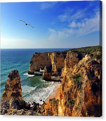 Flying Animal Canvas Print - Bird In Flight  At Marinha Beach by Pilar Azaña Talán