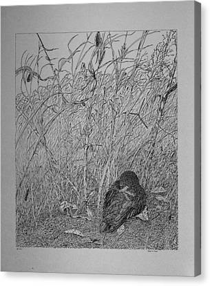 Canvas Print featuring the drawing Bird In Winter by Daniel Reed