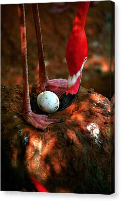 Canvas Print featuring the photograph Bird Is The Word by Lon Casler Bixby