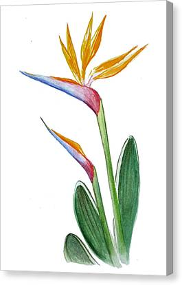 Bird Of Paradise Card Canvas Print