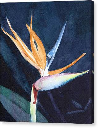 Bird Of Paradise Canvas Print by Charlotte Hickcox