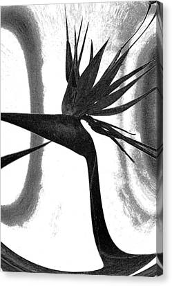 Canvas Print featuring the photograph Bird Of Paradise by Elizabeth  Doran