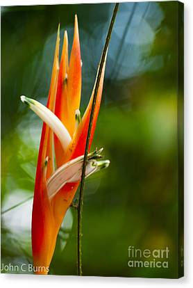 Canvas Print featuring the photograph Bird Of Paradise by John Burns