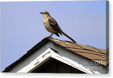 Bird On A Roof Canvas Print by Ursula Lawrence