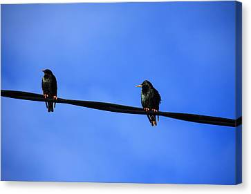 Bird On A Wire Canvas Print by Aidan Moran