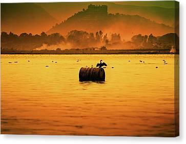 Bird Sitting On Drum Canvas Print by Pushp Deep Pandey / 2kPhotography