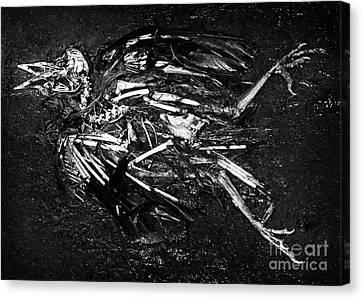 Bird Skeleton Canvas Print by Susan Isakson