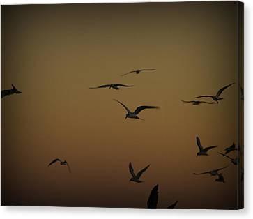 Bird Sky Canvas Print by James Granberry