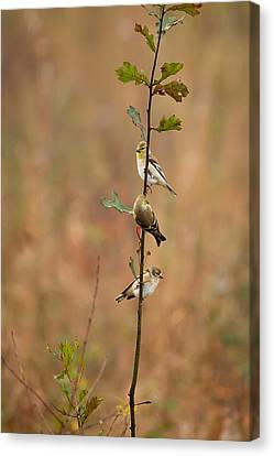 Bird Stack Canvas Print