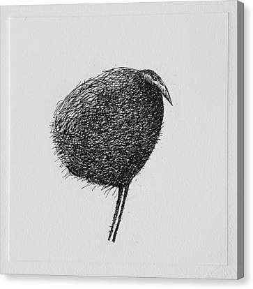 Bird Canvas Print by Valdas Misevicius