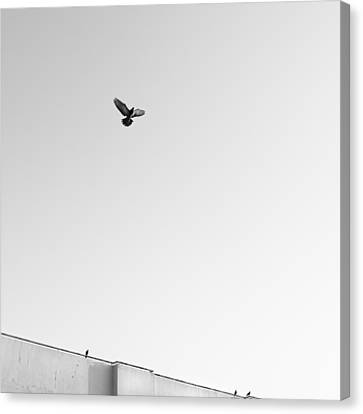 Birds Flying In The Sky Canvas Print by Tontygammy + Images