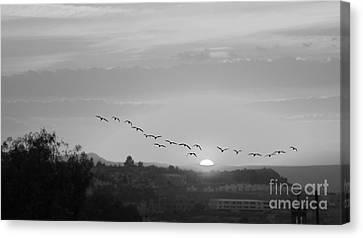 Canvas Print featuring the digital art Birds Flying Into The Sunset by John  Kolenberg