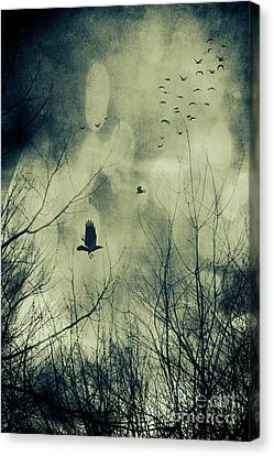 Creepy Canvas Print - Birds In Flight Against A Dark Sky by Sandra Cunningham
