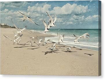 Birds In Flight Canvas Print by Cheryl Davis