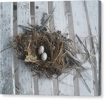 Bird's Nest On A Bench Canvas Print by Maria Medina