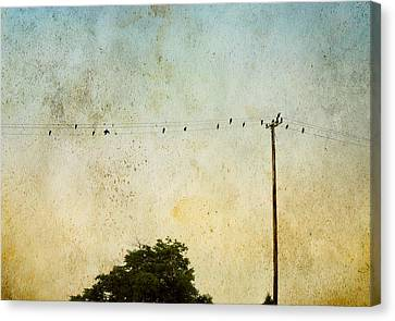 Birds On A Wire Canvas Print by Karen Lynch