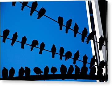 Birds On A Wire Canvas Print by Karol Livote