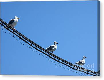 Canvas Print featuring the photograph Birds On A Wire by Michelle Joseph-Long