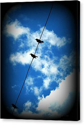Canvas Print featuring the photograph Birds On A Wire by Robin Dickinson