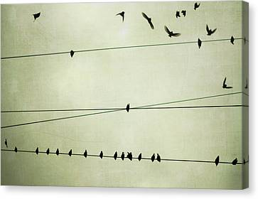 Birds On Telephone Wire Canvas Print by Lucy Loomis, Photographer