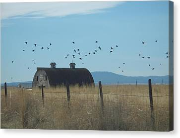 Canvas Print featuring the photograph Birds Over Barns by Debbi Saccomanno Chan