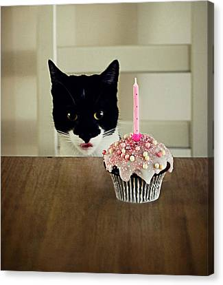 Birthday Cat Canvas Print by Elusive Photography