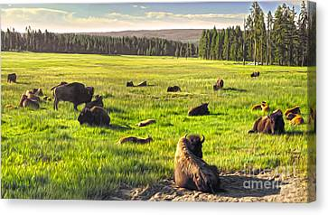 Bison Herd In Yellowstone Canvas Print by Gregory Dyer