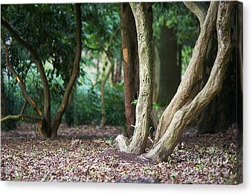 Bizarre Trees Canvas Print by Angela Doelling AD DESIGN Photo and PhotoArt