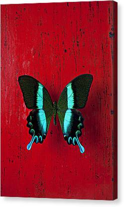 Black And Blue Butterfly  Canvas Print by Garry Gay