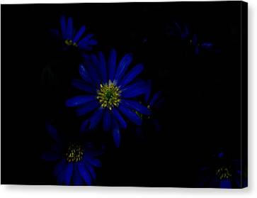 Black And Blue Canvas Print