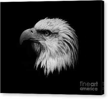 Canvas Print featuring the photograph Black And White Eagle by Steve McKinzie