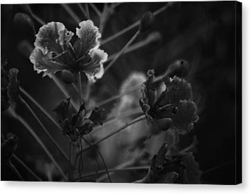 Plantation Canvas Print - Black And White Flower Shot Oil Painted Style by Atthamee Nithisathien