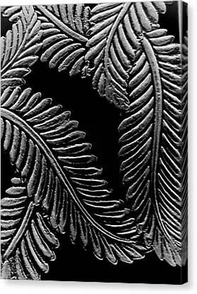 Black And White Leaves Canvas Print by Tanya Moody