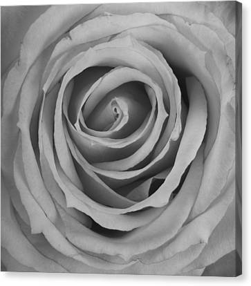 Black And White Spiral Rose Petals Canvas Print by James BO  Insogna