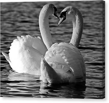 Black And White Swan Heart Canvas Print by Geraint Rowland