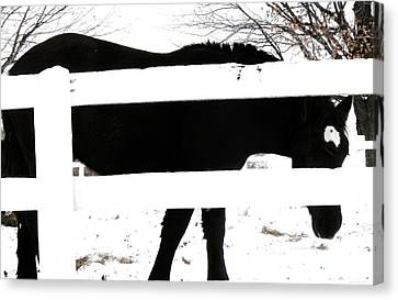 Black And White Canvas Print by Todd Sherlock